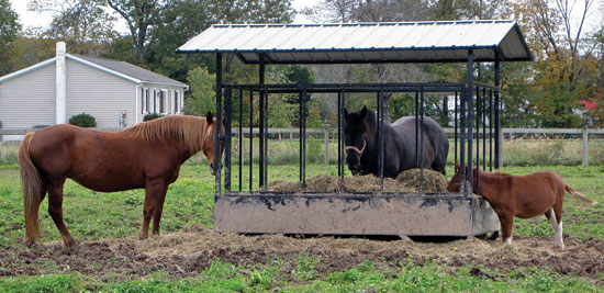 What Puts a Horse Rescue in Need of Rescue?