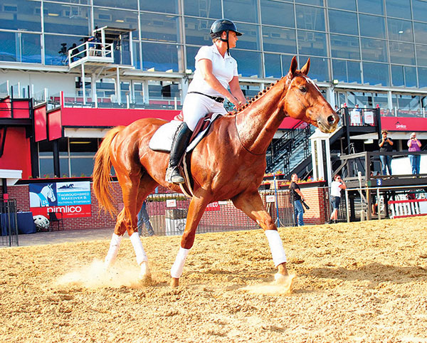 Thoroughbred Makeover Showcases Ex-Racehorses