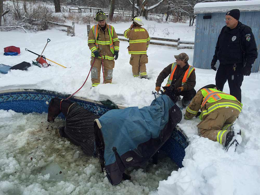 2 Horses being rescued from pool
