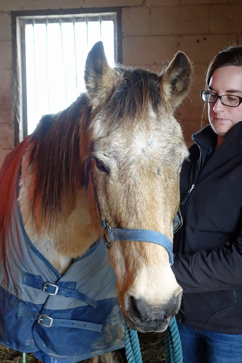 Jackie Burke of Last Chance Ranch rescue with Otto