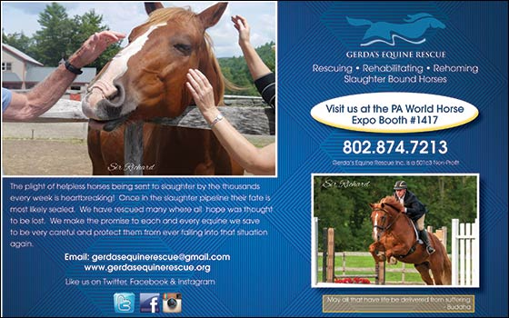 Horse Marketplace Directory - East Coast Equestrian Online Magazine